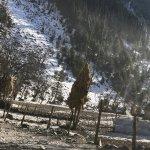 Photo de Grand Mumtaz Srinagar