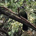 The turaco might peck on your window!