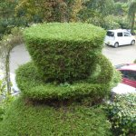 wonderful topiary 2