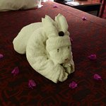 Another towel sculpture from our housekeeper