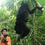 a howler monkey with two babies
