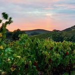 Sunset over Adobe Road Wine Country.
