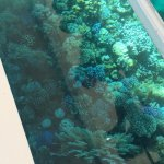 Photo of Glass-Bottom Boat Cruise and Coral-Reef Viewing of the Red Sea