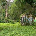 Foto de Rainforest Guesthouse
