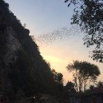 Bats at sunset!