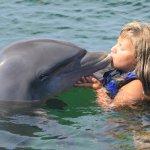 Photo of Dolphin Explorer