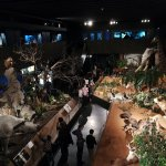 Photo of Museum of Natural History (Museum d'Histoire naturelle)