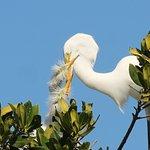 Everglades National Park Expedtion