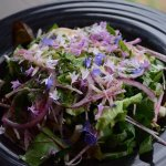 Super fresh organic salad from our Garden