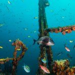 Photo de JADS Dive Center
