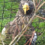 Rotterdam Zoo Foto