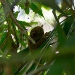 Photo de Philippine Tarsier and Wildlife Sanctuary