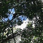 Toucan bidding us farewell!