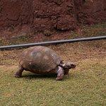 Tortoise = Turtle