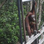 Photo of Tanjung Puting National Park
