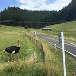 Photo of GreatSights New Zealand Day Tours