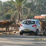 Photo of Safari Park