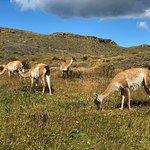 Photo of explora Patagonia - All Inclusive