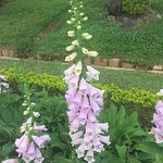 Photo of Dalat Flower Park