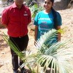 Plantation program