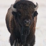 Photo de Antelope Island State Park