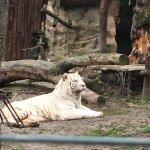Photo of Zoo