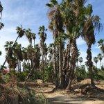 Foto de San Jose's Estuary and Bird Sanctuary