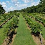 Wolf Creek Plantation Winery