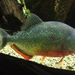 Foto van Sea Life Aquarium