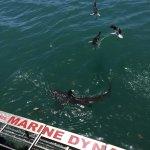 Foto de Marine Dynamics