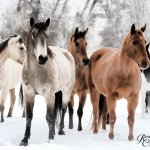 The horses are so well cared for and just beautiful