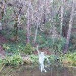 Schramsberg garden pond
