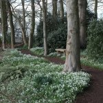 Woodland walk with Snowdrops