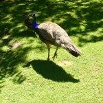 Photo de Staglands Wildlife Reserve