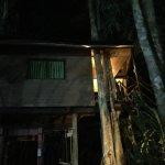 Photo de Khao Sok Tree House Resort