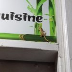 Gecko on the door