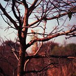 Foto de KBR National Park