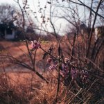 During transitional spring at KBR park.