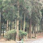 Foto de Yufuin Area