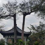 Han Lai Hai Gang Can Ting - Tai Nan Dian (Nan Fang Meng Shi Dai 4F)照片
