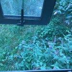 轟擊甲蟲小屋酒店照片