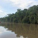 Kinabatangan River Foto