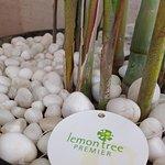 Foto de Lemon Tree Premier