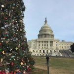 Just touring DC - the Capital and the Christmas Tree
