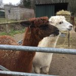 Cefn Mably Farm Park Picture