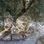 Photo of Agriturismo La Valle Dell'Usignolo