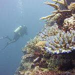 Astrolabe reef dive