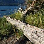Lake Quinault Lodge Foto