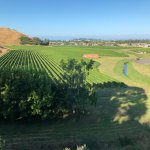 The view from the lawn as you wander with a glass of Hawke Bay's finest wines