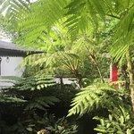 Photo of Antonio's Garden